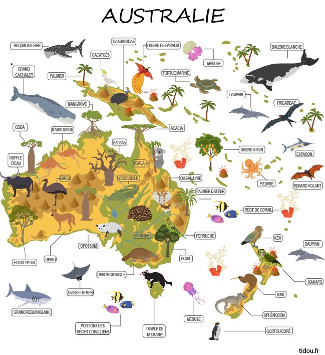 carte australie à imprimer Carte de l'Australie avec noms des animaux et arbres   tidou.fr