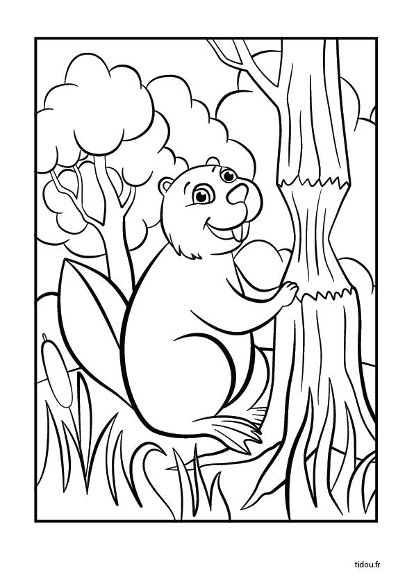 Coloriage Animaux Foret Imprimer.Coloriage Un Castor Dans La Foret Tidou Fr