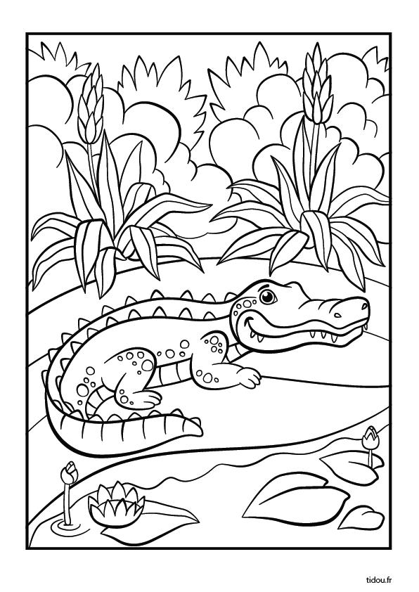 Coloriage Gratuit Crocodile.Coloriage Le Crocodile Tidou Fr