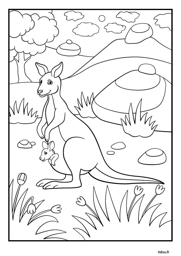 Coloriage Kangourou.Coloriage Un Kangourou Tidou Fr