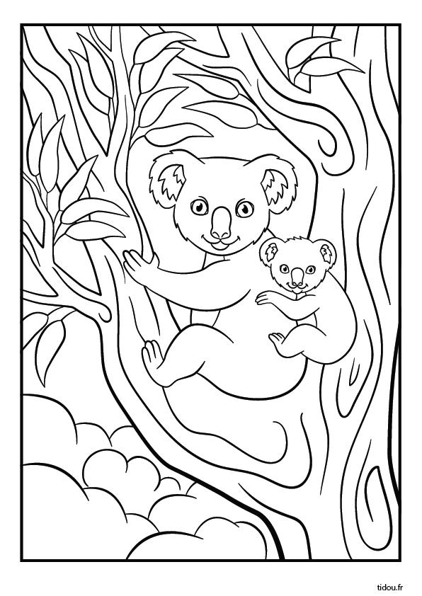 Coloriage Un Koala Et Son Petit Tidou Fr
