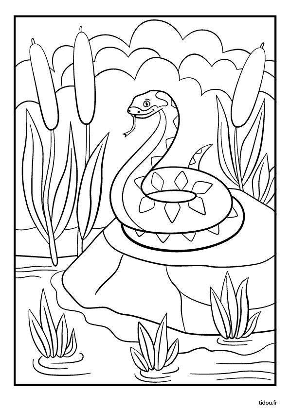 Coloriage A Imprimer Un Serpent Tidou Fr
