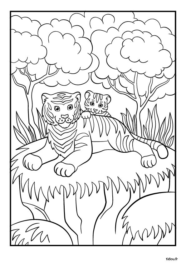 Coloriage Tigre.Coloriage Un Tigre Et Son Petit Tidou Fr