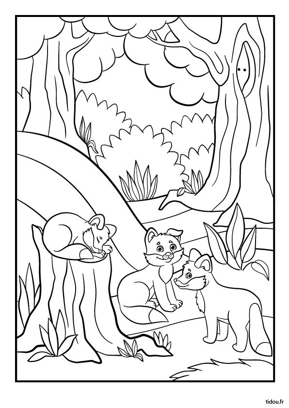 Coloriage Animaux Foret Maternelle.Coloriage Les Renardeaux Tidou Fr